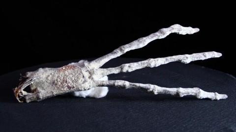 ▲穆森聲稱發現的:只有3隻手指和及腳趾的外星人木乃伊。(圖/翻攝自YouTube)
