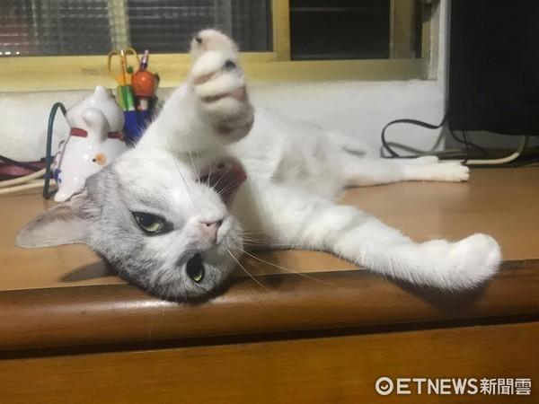 男主人準備美味鮮蝦 貓咪們一臉不屑。(圖/網友C-h Lin提供,請勿隨意翻拍,以免侵權。)