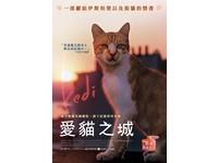 瘋電影/愛貓之城 人與貓的大同世界