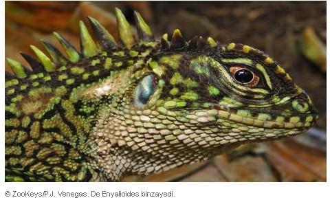 红眼蜥蜥人完整视频图片-red eyed lizard man