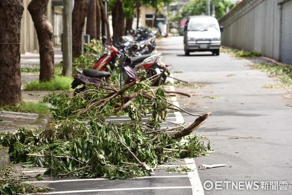▲▼尼莎颱風,樹倒,颱風災後,路樹,清潔隊,整理環境。(圖/記者李毓康攝)