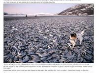 末日異相層出不窮?挪威海灘驚現20噸死魚