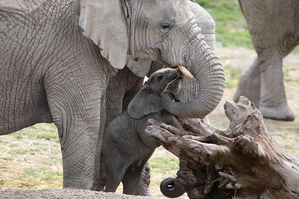 ▲▼大象。(圖/路透社)