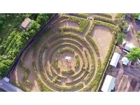台南新景點1公頃「稻田迷宮」 登瞭望台欣賞綠油美景