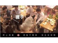 狗狗集體出現在熱炒店靠美色賣酒?!太促咪了~