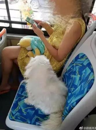 大媽公車讓自家毛小孩做一個位置,遭人勸阻還嗆聲。(圖/翻攝自微博)