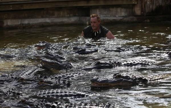 ▲▼麥可經常與鱷魚親密互動,感情相當要好。圖/翻攝自臉書/Michael Womer)