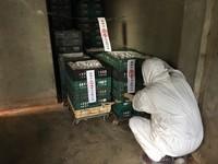 芬普尼蛋流向曝光!四海遊龍、拉亞弘爺部份店中鏢 毒蛋場爆增