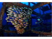 台灣綠島國際潛水攝影比賽9/30登場 總獎金3萬美金