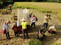 友善環境「石虎米」不灑農藥 靠石虎捕食小動物守護成長