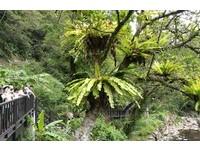 植物界最強住客「鳥巢蕨」 免房租還住景觀水岸房!