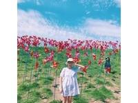 超接近北韓的熱門景點!「和平公園」有彩色風車草原