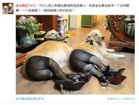 好委曲!黑絲狗蹬高跟鞋 成全男人的「遐想」