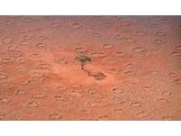 地底神龍噴火?非洲神秘麥田圈 竟是白蟻地下水壩