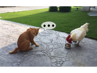 才剛舔兩口就被搶... 貓咪眼神死:那是我的雞肉罐頭耶