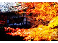 日本京都賞楓人氣景點!紅葉浪漫包圍「長岡天滿宮」