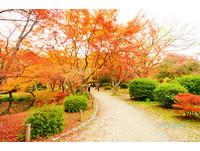 CP值最高的賞楓名所 美麗植物特多的京都府立植物園