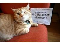「愛牠,就要保護牠」王鴻薇推貓狗義診 4年不間斷