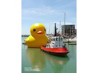 浴缸明星「黃色小鴨」成巨無霸 游進香港維多利亞港