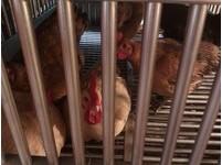 快訊/澳門首例人染H7N9禽流感!另一名「接觸者」回大陸