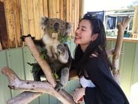 萌翻!無尾熊爺一臉淡定趕下班 澳洲與野生動物愛的抱抱