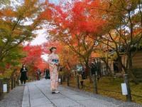 京都最新楓況!3000楓葉染紅永觀堂 浪漫美景像走進畫裡