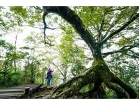 漫步深秋太平山步道 探訪台灣最大山毛櫸純林