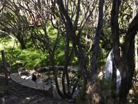 真正的森林浴!澳洲超夢幻森林溫泉 蟲鳴鳥叫中愜意泡湯