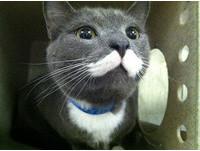 天生「牛奶鬍」 可愛小貓順利被領養