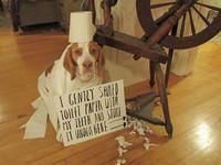 別讓狗養成「簽樂透」心態 處罰不是解決問題的方法!