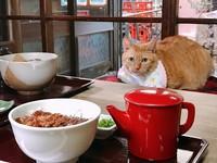 連貓也想偷吃的鰻魚飯三吃! 特搜大好評「名古屋美食」特輯