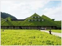 日本草根屋咖啡廳 有超遼闊庭園、club harie年輪蛋糕