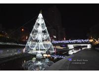 台中柳川藍帶水岸光景藝術 夢幻聖誕樹、鬱金香花海