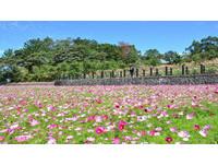 高雄賞花新景點!雙湖森林公園打造20公頃浪漫階梯花海