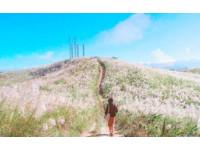 新北秘境「三角埔頂山」芒花正盛!銀白色花浪超夢幻
