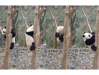 不只九寨溝!四川遊玩攻略 吃麻辣鍋、逛寬窄巷、看貓熊