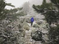 積雪持續增加!合歡山、玉山化身銀白雪國 山上湧車潮