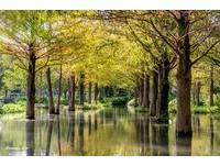 預約限定的自然寶庫!宜蘭秘境有「落羽松林、莫內池」