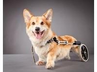 美攝影師替殘疾狗狗拍寫真:牠們的靈魂閃閃發光!