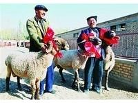 富豪新寵「刀郎羊」 精液價值140萬