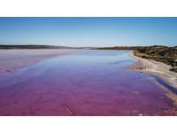 繽紛西澳~嚐鮮龍蝦.燒鴨 夢幻粉紅湖、金色石陣超搶眼