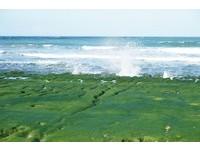 春季限定綠色奇景提早見客 老梅綠石槽設專人導覽解說