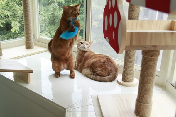 猫咪专属阳台,能在这里晒太阳和游戏.(图/李小飞提供)