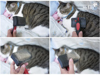 貓奴推薦五法寶 克服貓毛滿天飛