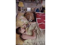 「美女與野獸」真實版! 名模養獅同住同睡