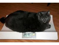 你家毛孩子過重了嗎?寵物吹瘦身風 「減肥營」戒零食