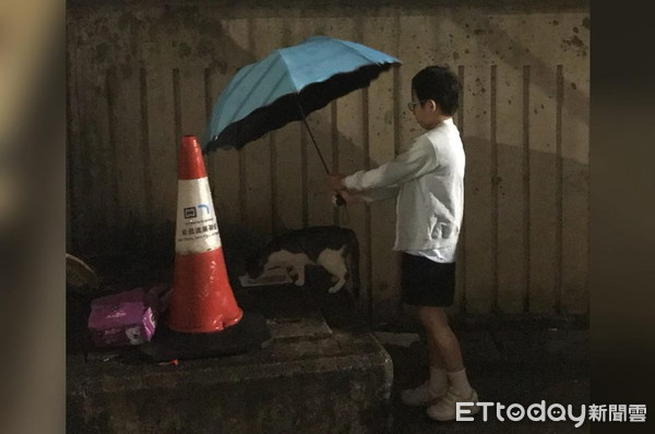 猫打伞站在雨中-吃饭 8岁女童撑伞站身后 我不想牠淋雨