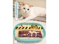 進擊的「貓嘔吐便當」 貓奴自嘲:愛貓真是犯賤啊!