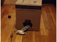 「貓咪黑洞」動作超快 暴風吸入路過玩具