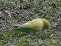 榕樹學堂訊/大安森林公園神秘逸鳥,等您去發覺
